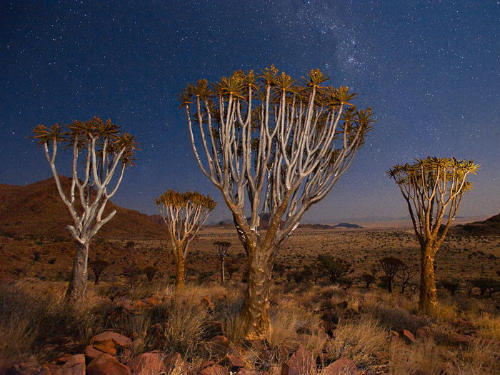 Quiver Trees, Namibia..